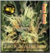 Greenhouse Pure Kush cannabis pick n mix seeds available to buy
