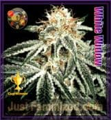 Greenhouse white widow cannabis seeds for sale online cheap