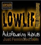 Lowlife Automatic Mix feminised best weed pot seeds for sale
