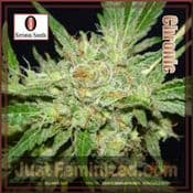 Serious Chronic female cannabis pick and mix seeds for sale