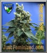 TH Seeds Sage n Sour Cannabis Seeds Marijuana Strain Cheapest Online
