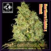 Northern Light x Skunk female which cannabis pick n mix seeds