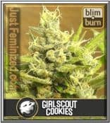 Grow Blim Burn Girl Scout Cookies Auto High Yield & Fast Flowering time