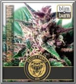 Blim Burn Seeds Auto Grizzly Purple Female Ganja, Weed, Pot