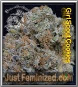 Find the Best UK Retailer for Don Avalanche Girl Scout Cookies Seeds