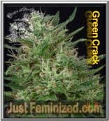 Grow Don Avalanche Don Green Crack - Good Yield Fast Flowering time