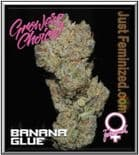 Growers Choice Banana Glue 5 Feminized Seeds