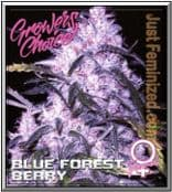 Growers Choice Blue Forest Berry Cannabis Strain Smoke Report is Good