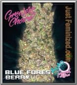 Growers Choice Female Blue Forest Berry Auto Cannabis Seeds for Sale