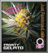 Where to Buy Frosty Gelato Growers Choice Feminised Cannabis Seeds