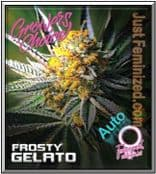 Frosty Gelato Auto - Finest Cannabis Seed for Sale - Growers Choice