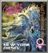 We Sell only Original Growers Choice New York Diesel Cannabis Seeds