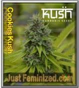 Buy the Finest Quality Kush Seeds Cookie Kush Cannabis Seeds