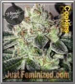 We Sell only Original Mamiko Cookies Cannabis Seeds