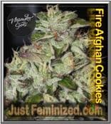 Fire Afghan Cookies Mamiko - Buy from Trusted Cannabis Retailer