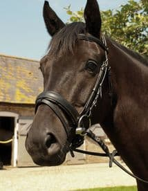 Heritage Comfort Bridle with Flash Noseband