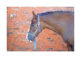 Hy Tartan Head Collar with Lead Rope~Navy/White/Blue