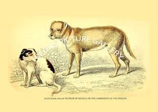 ALCO (Caniis Alco) & TECHICHI OF MEXICO, OR THE CARRIERDOG OF THE INDIANS