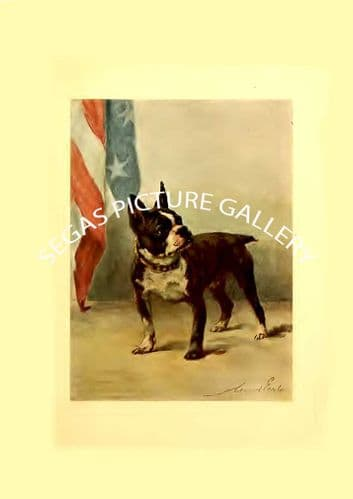 Fine art print of the BOSTON TERRIER by Maud Earl (1910)