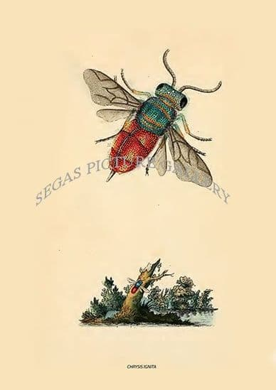 British Insects by E Donovan Volume I (1792)