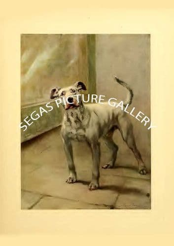 Fine art print of the BULL DOG by Maud Earl (1910)