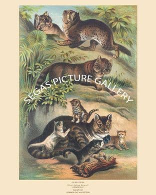 Cat, Malay Cat, Common Cat with Kittens