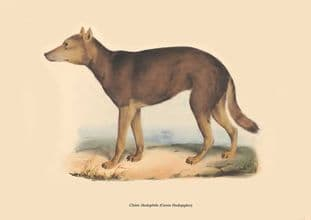 Chien Hodophile (Canis Hodopylax)