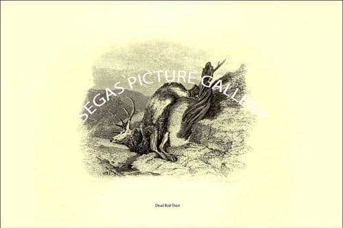 Fine art print of the Dead Red Deer  by Sir Edwin Landseer -1853)