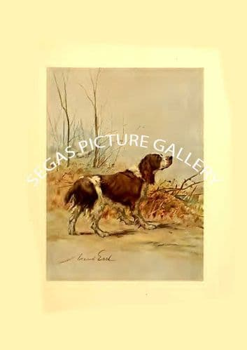 Fine art print of the ENGLISH SPRINGER by Maud Earl (1910)