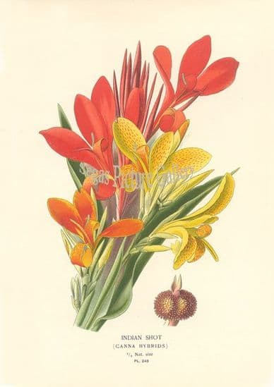 Flowers of Garden and Greenhouse by D. Bois (1897)