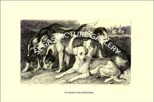Fox Hounds, of the Hatfield Hunt