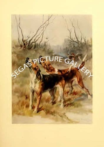 Fine art print of the FOXHOUND by Maud Earl (1910)