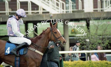Racehorse Golden Odyssey with Jockey A P McCoy