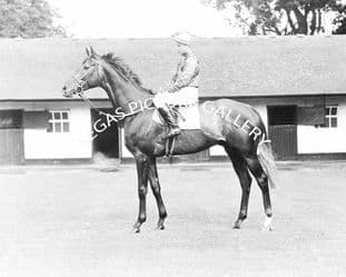 Grey Magic with Lester Piggott (061-01)