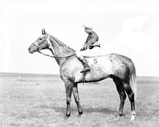 Grey Magic with Lester Piggott (246-01)