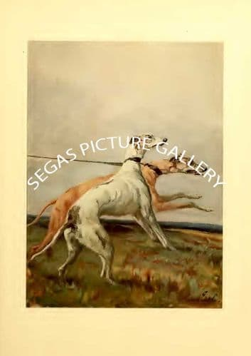 Fine art print of the GREYHOUND by Maud Earl (1910)