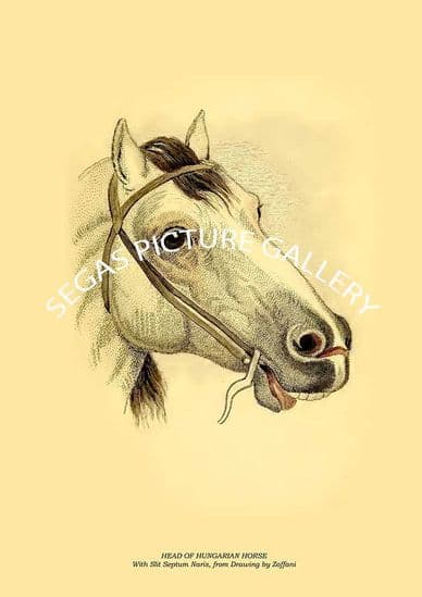 Horses, the Equidae or Genus Equus of Authors by Lieut.-Col. Chas. Hamilton Smith (1841)