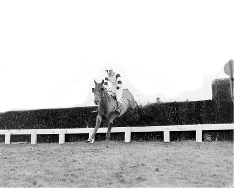 Racehorse Kings Counsellor with Jockey D V Dick