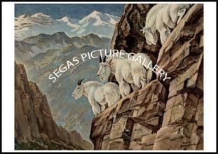 Mountain Goats by Richard Bransom