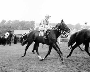 Never Say Die with Lester Piggott (129-17)