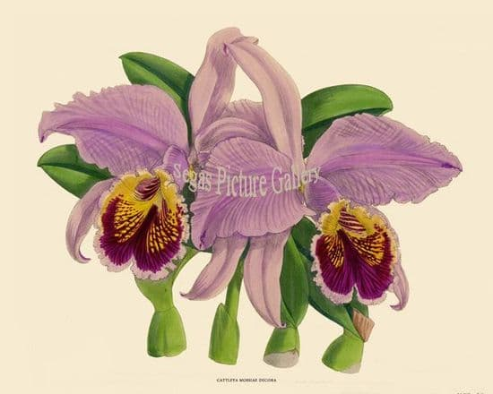 Orchids by John Nugent Fitch (1891)