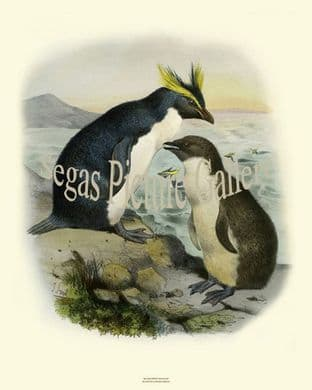 Penguins, Rockhopper by Joseph Smit (1860)