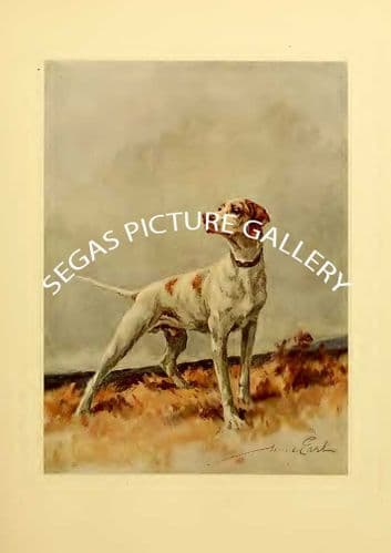 Fine art print of the POINTER by Maud Earl (1910)