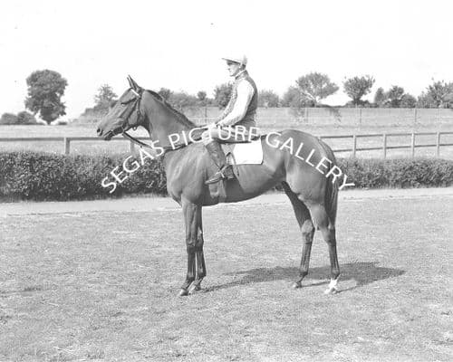 Racehorse Queen of Sheba with Jockey F Barlow
