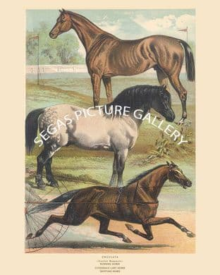 Running Horse, Clydesdale Cart Horse, Trotting Horse