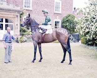 Scintillate with Pat Eddery (696-01)