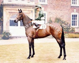 Scintillate with Pat Eddery (696-08)