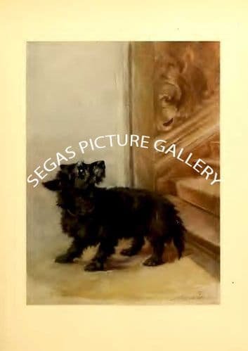 Fine art print of the SCOTTISH TERRIER by Maud Earl (1910)