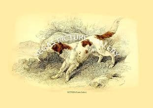 SETTER (Canis Index)