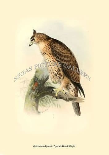 Fine art print of the Spizaetus Ayresii - Ayres's Hawk-Eagle by Philip Lutley Sclater (1859 to 1862) reproduced by Segas Picture Gallery.<br />Open Edition
